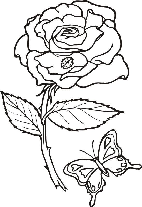 Wunderbar Malvorlagen Rosen Blumen Galerie - Beispielzusammenfassung ...